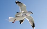 oiseau vole.jpg